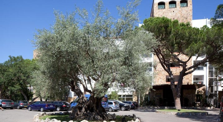H.TOP Caleta Palace Hotel Image 14