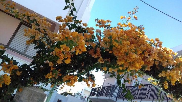 Kardamena Holidays Apartments in Kardamena, Kos, Greek Islands