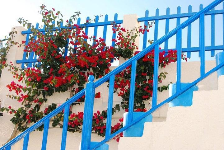 Nissia Kamares Hotel & Apartments Image 37