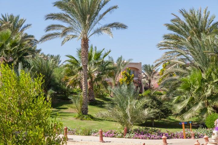 Future Dream Lagoon in Marsa Alam, Red Sea, Egypt