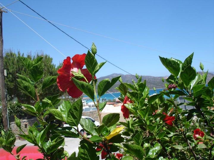 Pella Apartments in Gouves, Crete, Greek Islands